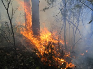 2005- Kingston block- Prescribed burning got out of hand- became a bush fire