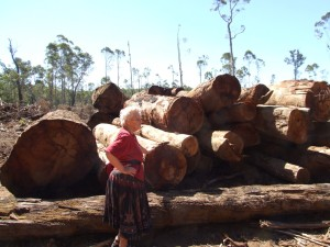 Logging Northcliffe area